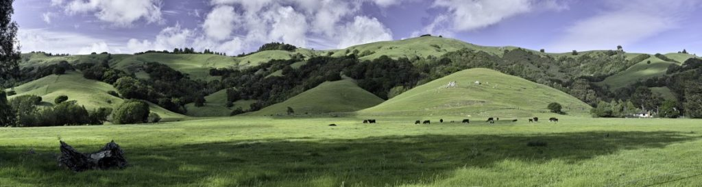 Timothy Case, Marin County, April 2014, digital inkjet print