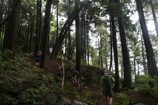 hiking up slope through some very old hemlock forests