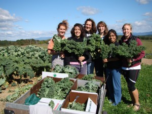kale gleaning