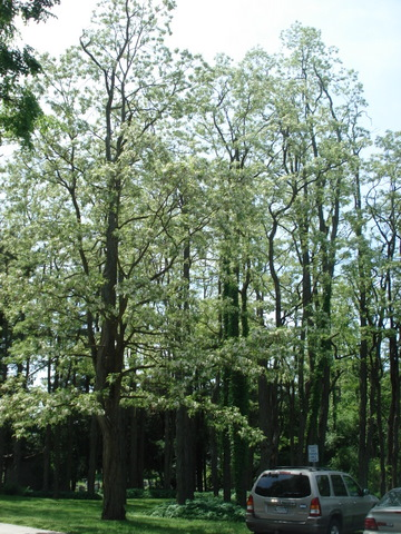 Stewart Woods in bloom
