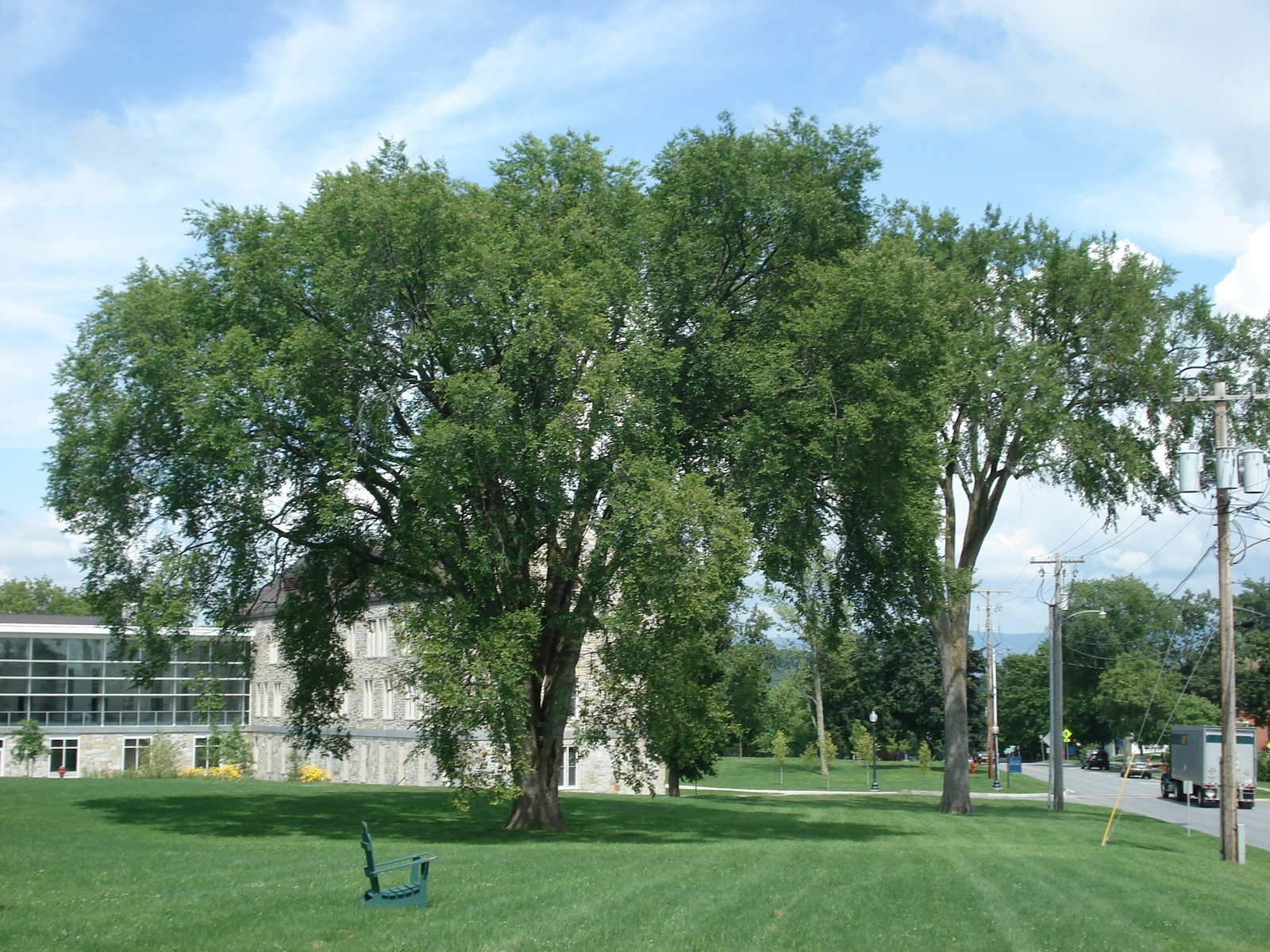Landscaping Under Elm Trees : Trees and a final page on the history of elm tree at middlebury
