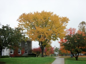 Battell North Elm-fall color