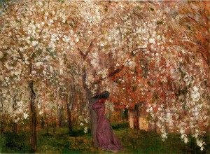 800px-Rippl_Sour_Cherry_Tree_in_Blossom_1909