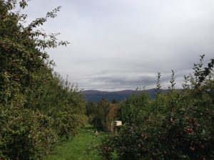My first adventure to Happy Valley Orchards during fall 2013