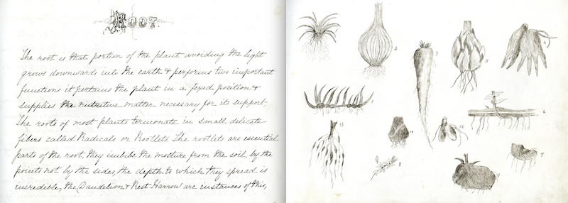 "Pages from Annie M Ward's ""Notes on Botany,"" 1850-1860"