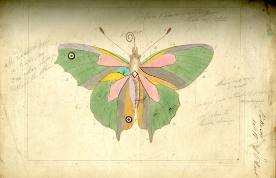"Butterfly diagram from ""The Aurelian"" by Moses Harris, 1840"