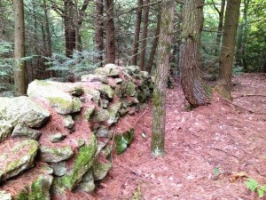 Deep Woods Stone Wall