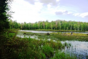 Abbey Pond and swamp